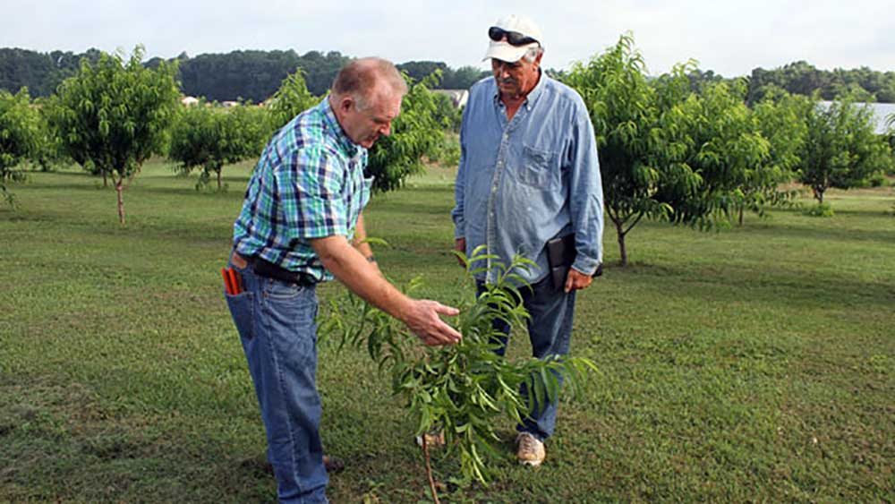 Two men inspecting an apple tree sapling
