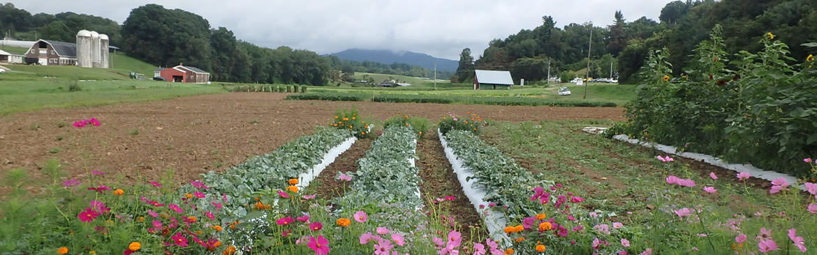 Specialty crops seen at the Mountain Horticultural Crops Research Station