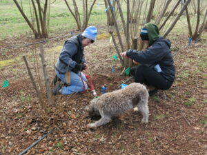 two people and a dog hunting for truffles in a truffle orchard
